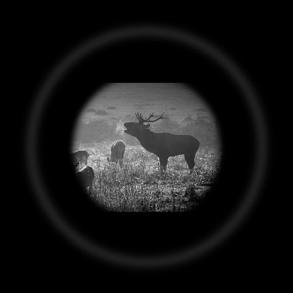 wildguarder_enhanced-nighttime-sensitivity