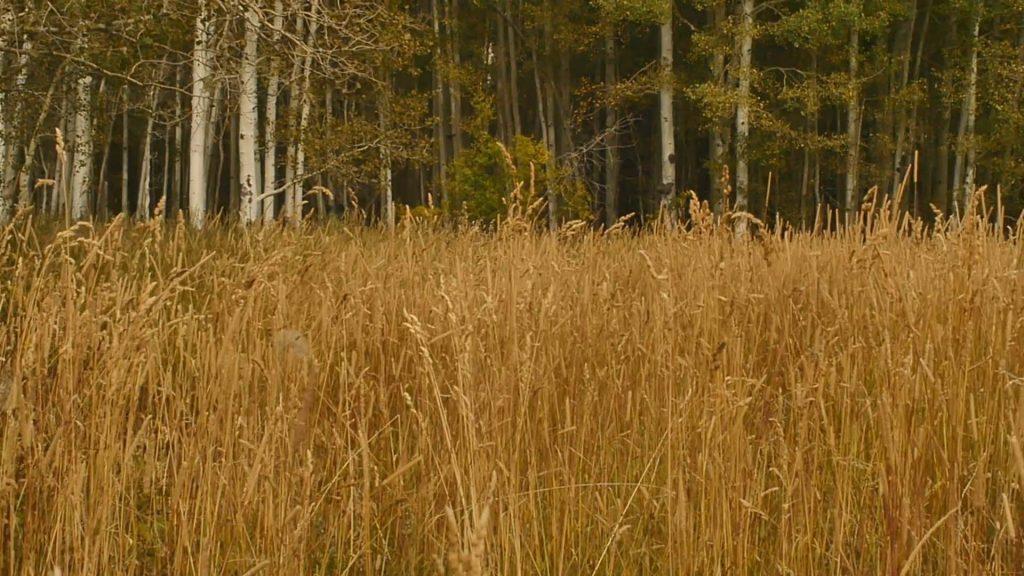 Hang higher - Avoid Tall Grass-2