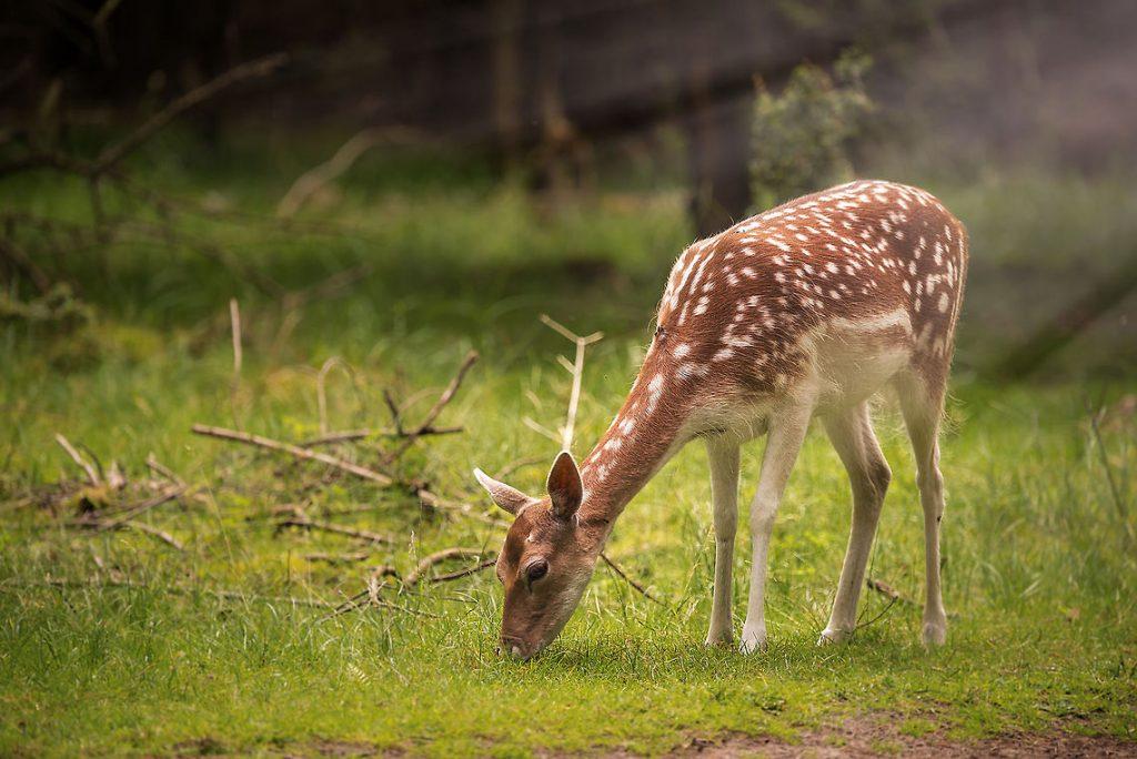 Deer Feeding areas-1