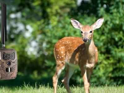 Get the best deer pictures