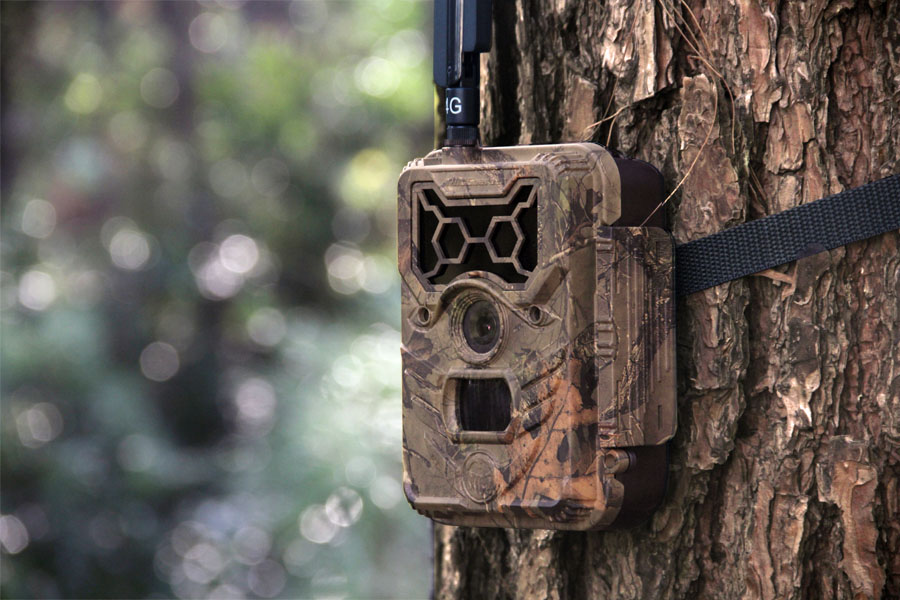 Mount your Camera to a Sturdy Tree