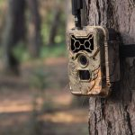 4 Trail Camera Tips: Position Your Trail Camera to Get the Best Shots