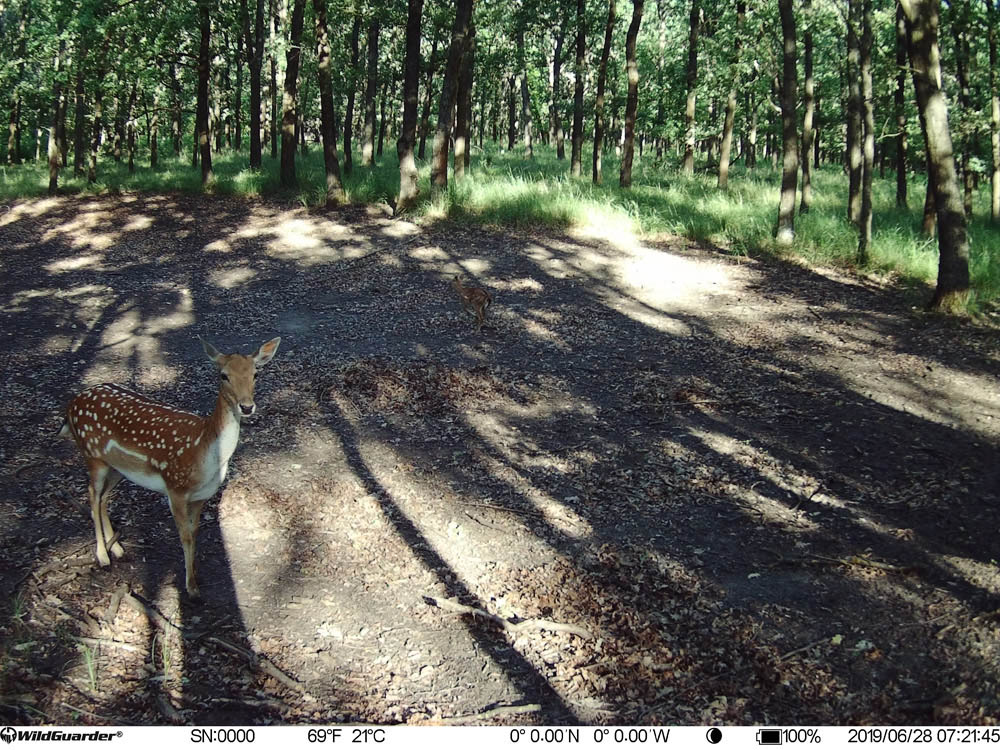 WildGuarder 4G Hunting Camera Picture