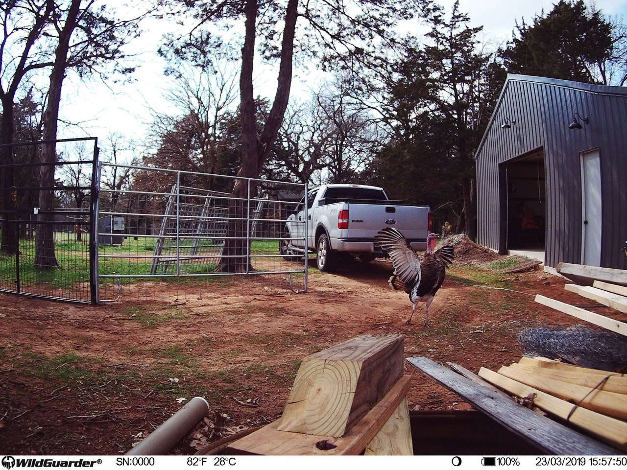 4G Wireless Trail Camera