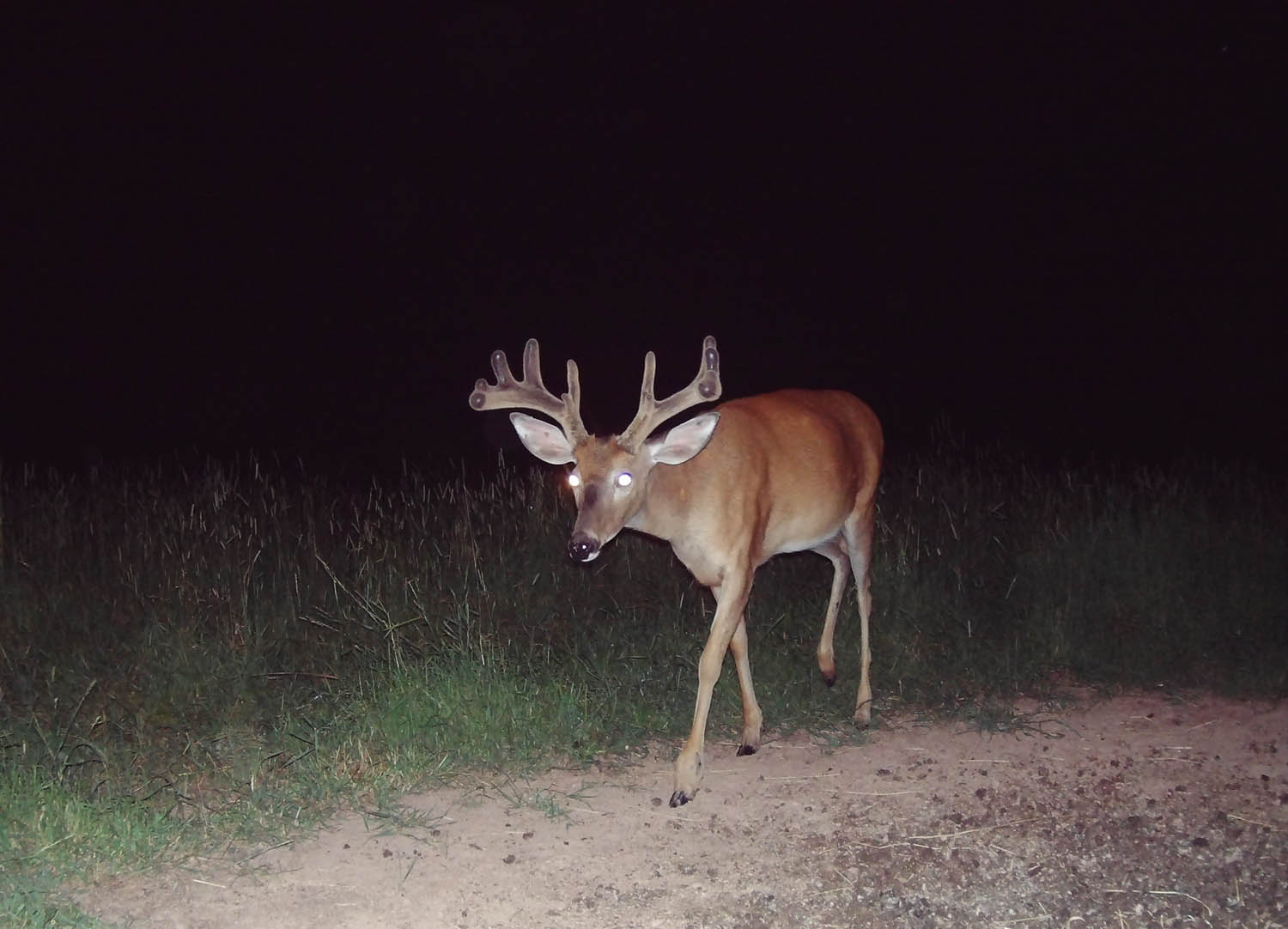 How To Choose The Best Night Vision Trail Cameras Hunting News